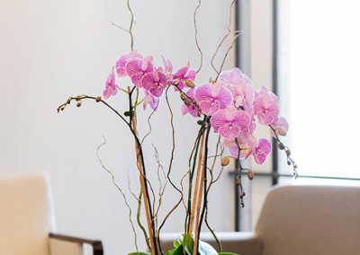 An office flower arrangement staged with three pink and white Phalaenopsis Orchids with willow and green moss, on a coffee table with furniture around it.