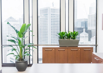A classic office space overlooking large skyscrapers, staged with a Strelitzia Nicolai Bird of Paradise floor plant next to a cabinet with a grey rectangle planter box on top, staged with 3 vibrant Aglaonema plants.
