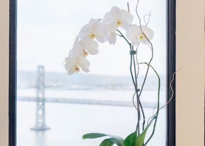 A beautiful white Phalaenopsis Orchid arrangement staged with willow in a grey modern pot, in front of a window, with the San Francisco Bay Bridge in the background.