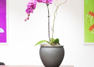 An elegant pink Phalaenopsis orchid arrangement with willow, in a gunmetal grey pot, on a desk in an office reception area.