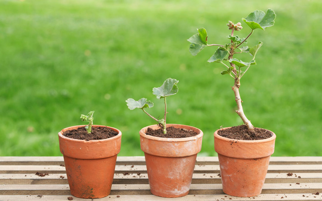 5 Steps for Repotting your Indoor Plants