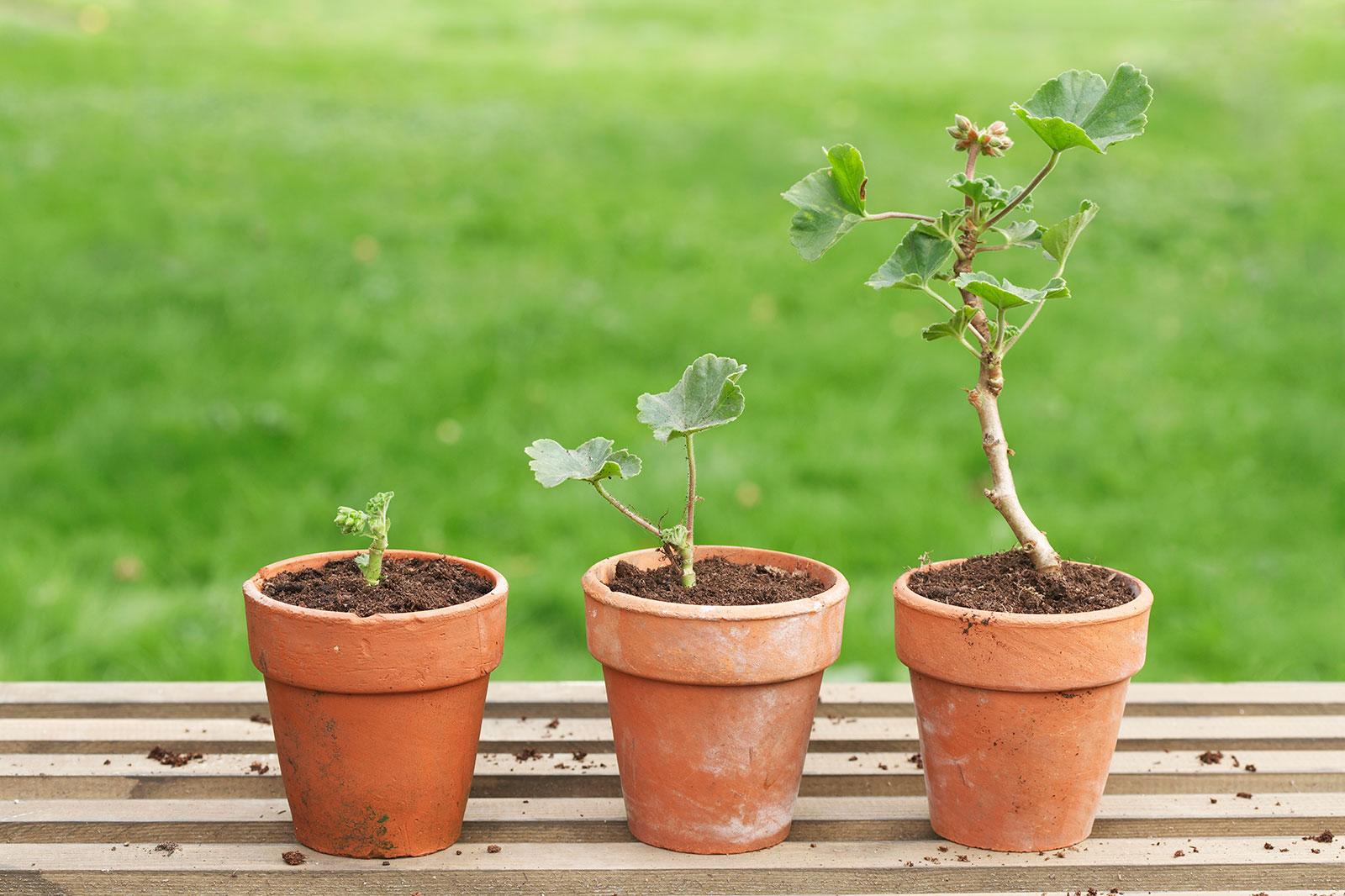 Repotting your indoor plants