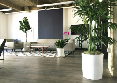 A modern loft office reception seating area, plantscaped with three large gorgeous tropical plants in white containers, placed around the furniture with a pink orchid in the background.