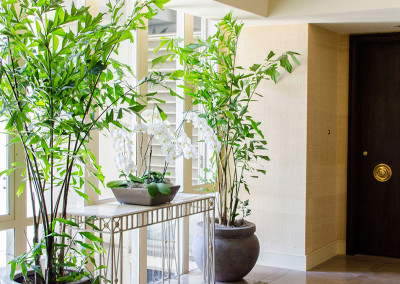 An elegant residential lobby with two large Caryota Mitis Fishtail Palms, staged around a table displaying a classic white Phalaenopsis Orchid arrangement.