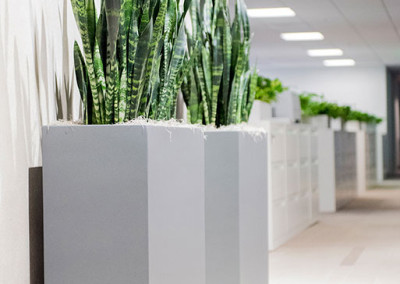 Six gorgeous dark green Sansevieria snakes plants, staged in two large gunmetal grey container boxes, in a modern office reception area.